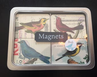 Sale!  Assorted bird Magnets - Set of 24 by Cavallini
