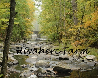 River Landscape Photograph Autumn Photography Nature Photography Peaceful Gift Matted Photograph Wall Art Home Decor Children Decor Fine Art