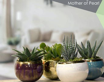 """Magnetized Mother of Pearl Planter with Live Plant - 3 x 2.5 x 5"""" - Gold"""