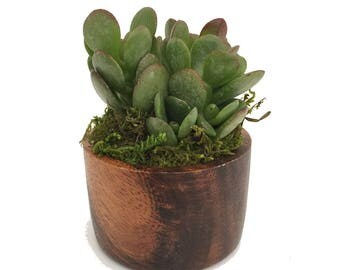"""Copenhagen Acacia Wood Cylindrical Planter with Live Plant - 3"""" x 4"""""""