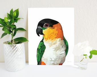 Black Headed Caique, Caique Print, Parrot Memorial, White Bellied Caique Art Print, Bird Lovers Gift, Parrot Gift, Tropical Bird Print