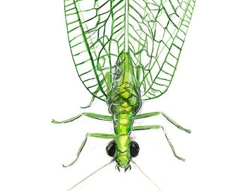 Lacewing - bug art print