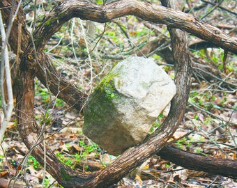 Rock suspended by vines