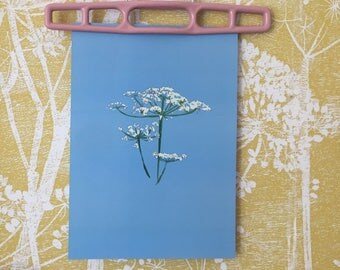 cow parsley art print