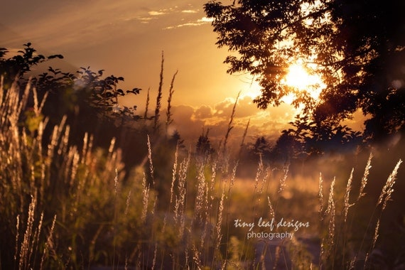 Hayfield Trees and the Setting Sun Fine Art Photography 5x7 8x10 11x14