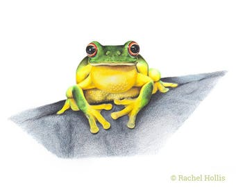Original Wildlife Nature Art - Red-eyed Tree Frog