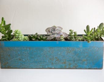 Blue metal box with succulents