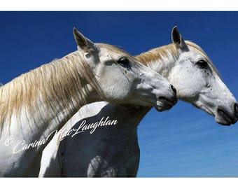 Càirdeas / Alliance /Amitié -  Equine Fine Art Horse Photography - Cheval Etalon  Photographie d'Art