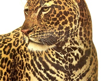 1970s Big cat illustration - Vintage Leopard Print