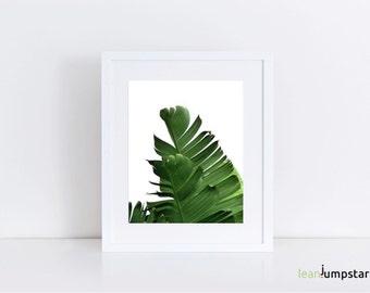 Banana Leaf Poster, Banana Leaf Art, Banana Leaf Print, Palm Leaf Wall Art, Banana Leaf Decor, Plant Prints, Palm Print Art, Tropical Print