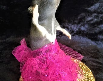 Taxidermy Ballerina Rat - weird, curio, novelty, gift