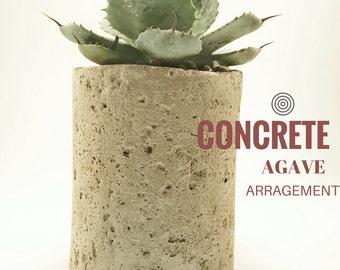Succulent Arrangement - Succulent Planter - Succulent Gift