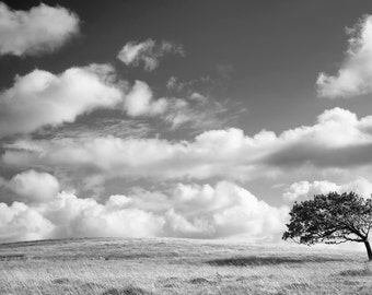 Wind Blown Tree, meadow, field, black and white print, art print, fine art print, sky, clouds,landscape, Lake District, Northern England