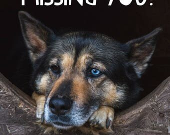 """MISSING YOU Necklace! Adorable German Shepherd face expressing love and longing on a square charm hanging from 22"""" sterling plate chain!"""