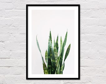 Snake Plant Print, Printable Wall Art, Plant Prints, Tropical Printable, Botatincal Art, Green Wall Art, Leaf Print, Instant Download