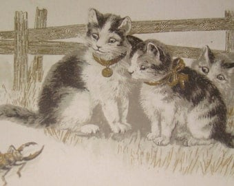 SALE Vintage Cat Postcard