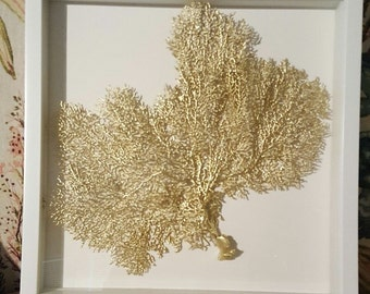 Framed Sea Fan Coral