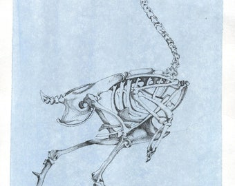 Chicken Skeleton Drawing