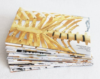Recycled Envelopes Skeleton Book / Human and Animal Skeleton Anatomy Envelopes, 4.5 x 6, set of 10 by PrairiePeasant