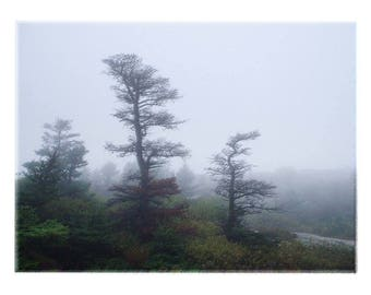 Morning Fog in Acadia National Park, Maine - Trees and Nature art Wall Decor