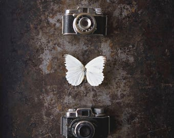 White Butterfly ~ 8x10 photo print