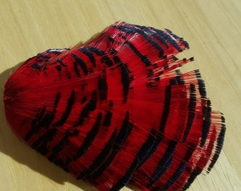 Blood Red Lady Amherst Pheasant Tippet Feathers, Approx 38+ Feathers, Wholesale Closeout