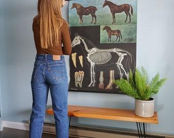 Vintage Horse School Chart by Hagemann