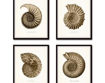 Sepia Nautilus Shell Print Set, Ernst Haeckel, Giclee, Art Prints, Nautical Art, Seashell Print, Sepia, Collage, Beach Cottage Decor, Art