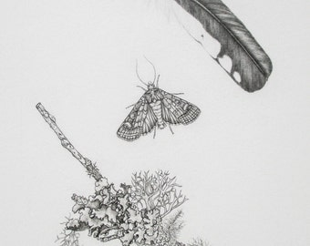 Woodpecker feather, Geometer moth, and Lichen covered branch Pencil Drawing  (Limited Edition Print)