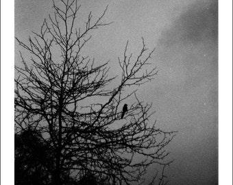 Handmade photo print: Black Bird - dark variant