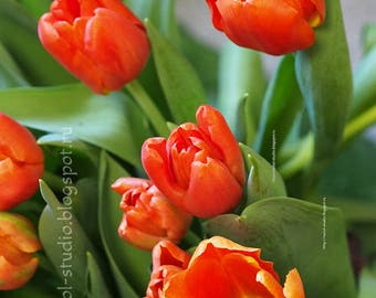 Photo print tulip, bright spring flower, tulips, wall decor, photo print tulip, kitchen, gift to bedroom, botanical print, red green tone