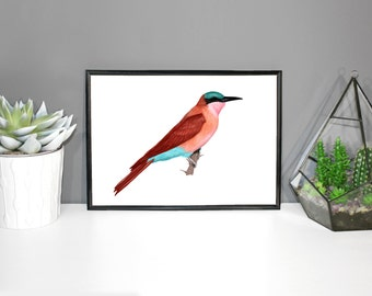 Carmine Bee Eater - Original Bird Artwork Print