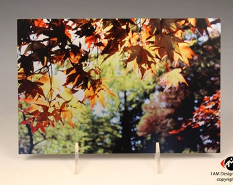 Japanese Maple on Brushed Aluminum