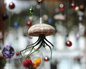 Hanging 'Jellyfish'; sea urchin shell air plant holders