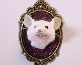 Taxidermy Mouse Head Mount - Red