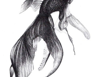 Gold Fish Graphite Drawing - A5 Print