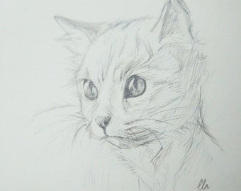Cat Head Drawing