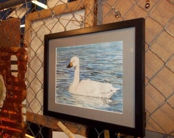 """Tundra Swan matted print """"Solitary Swimmer"""""""