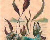Mermaid Print, Mermaid Wall Art, Mermaid Decor,  Fine Art Print, Ocean Art, Sea Nymph, Coastal Beach Decor,