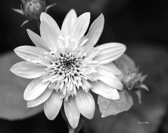 Black and White Photography, Flower Photography, Black and White Wall Art, Fine Art Photography,  Flower Print, Flower Wall Decor, Art Gifts
