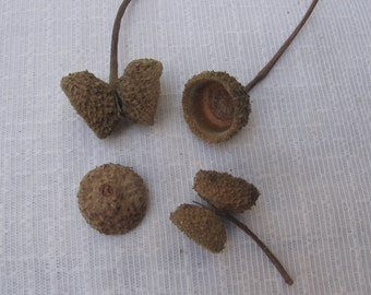 Large Acorn Caps / Natural Crafting Supply / 75+ Assorted Single Double Caps / Brown Acorn Cap / With & Without Stems / Fall Autumn Crafts
