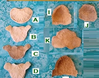 All-Natural Bison/Buffalo and Elk Vertebrae DISC Bones (choose from 8) From mtns of NM. Boiled-Clean. Natural Wavy Design-- Medallions (?)