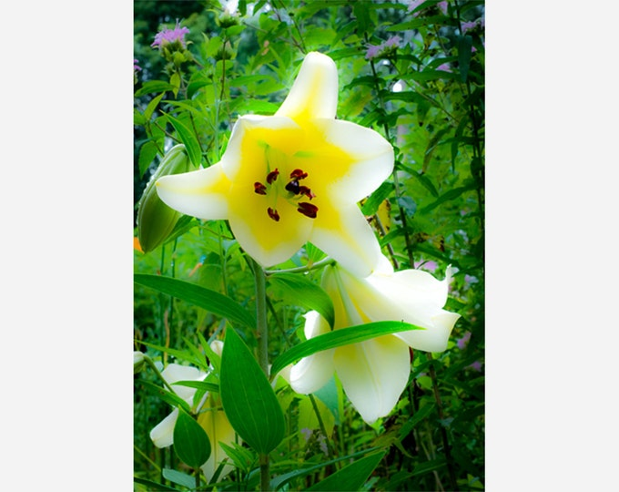 PATRICIA'S LOVELY LILY | modern fine art photography blank note cards custom books interior wall decor affordable pictures –Rick Graves