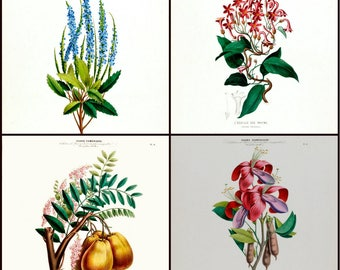 "Set of four vintage flower prints, 8"" X 10"" reproduced from the 1800's. These prints are great for Wall decor in the Kitchen or Dining Room"