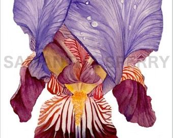 "Watercolor Flower | Limited Edition | Print of painting ""Bearded Iris II"" | Iris | Botanical print | Valentine's gift | Home decor"