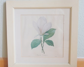 Vintage Botanical Print P J Redoute Under Glass, Magnolia Soulangiana, Wooden Frame