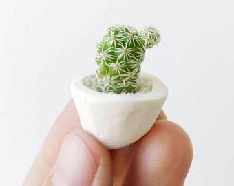 Thimble Cactus and Mini Ceramic Planter // Succulent Planter // Cactus