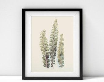 Nature Photography, Ferns, Botanical Print, Botanical Photography, Botanical Art, Leaves, Fern Photography, Minimalist, Fronds, Nature Print