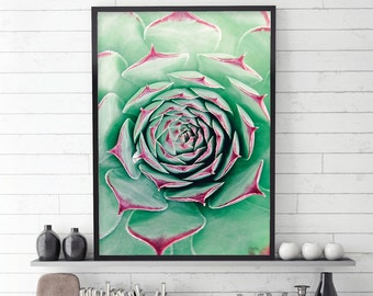 Succulent, Succulent Prints, Succulent Photography, Close Up, Botanical Print, Botanical Art, Succulent Wall Art, Downloadable