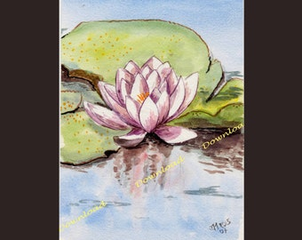 Download - Water lily